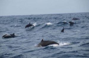 Dolfijnen bekijken op Bali