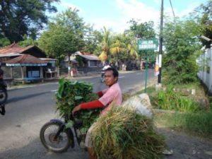 Lokale boer op Bali