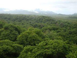 Jungle op Bali