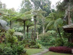 Budugul Bali