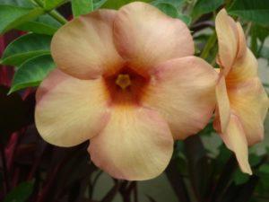 Bloemen op Bali