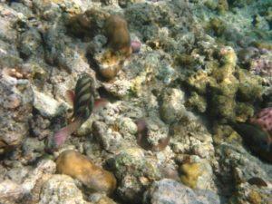 Snorkelen met gids op Bali