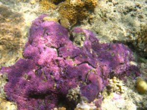 Snorkelen bij Amed Bali